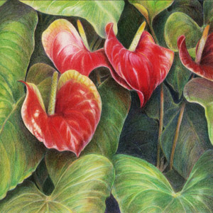 2nd Place: 'Anthurium in Bloom' by Sandy Birkholz