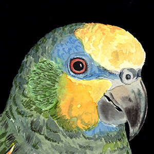 2nd Place: 'Amazon Parrot' by  Mother Barbara of Etna, CA