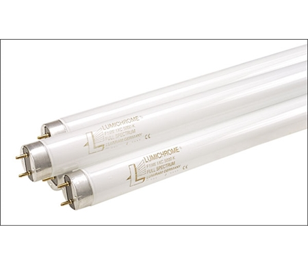 Fluorescent lamps provide natural lighting indoors.