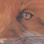 'Fox Stare' by Stephanie Price